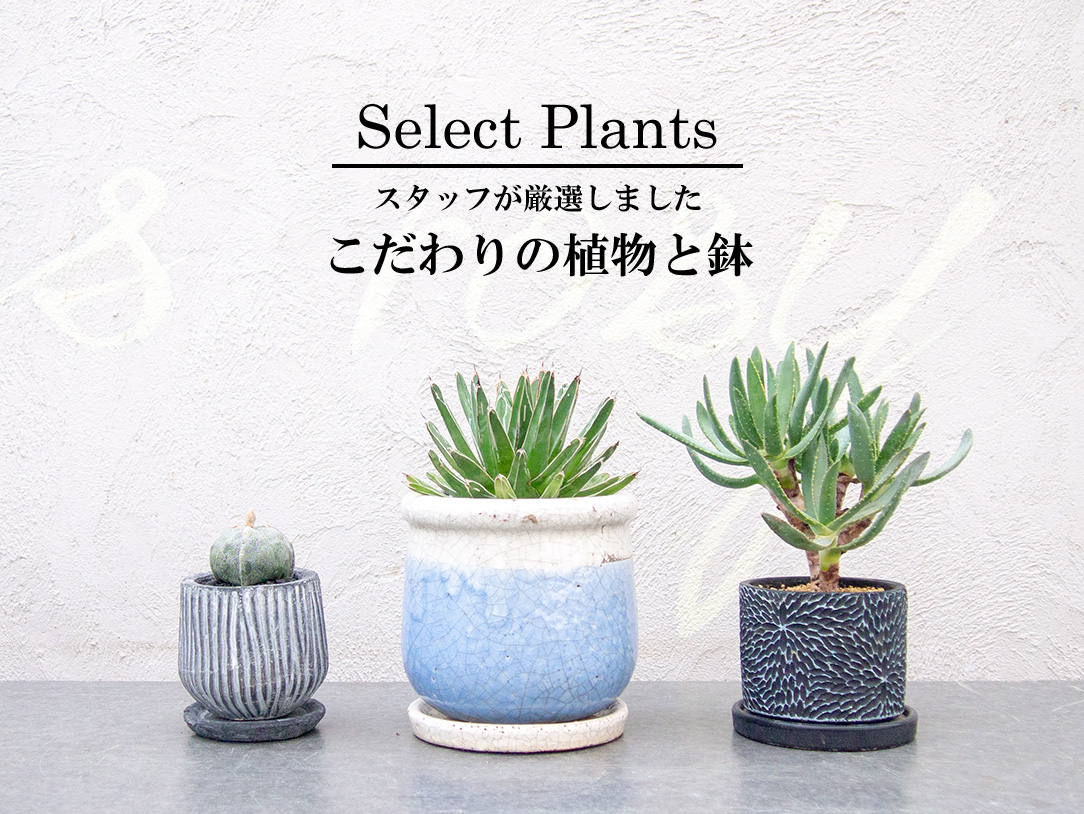 こだわりの植物と鉢
