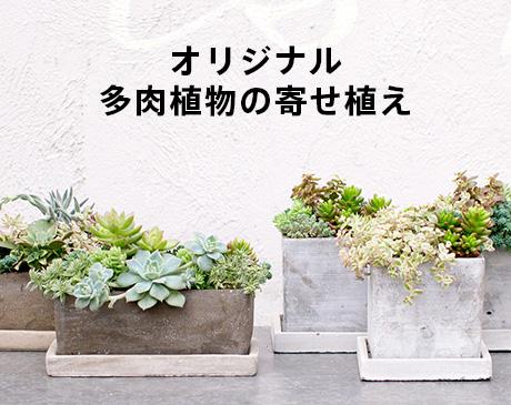 オリジナル多肉植物の寄せ植え