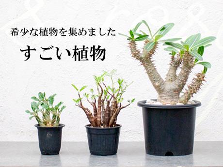 すごい植物